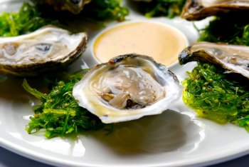 Shellfish in Houston: Oysters