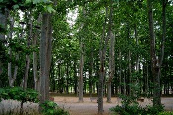 Parc de la Devesa (Devesa Park)