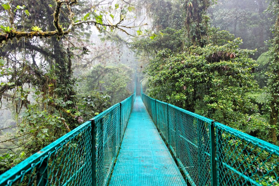 Biologycal reserve Cloudy Forest of Monteverde